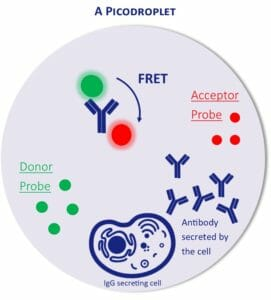 IgG detection assay from CHO cell in picodroplet