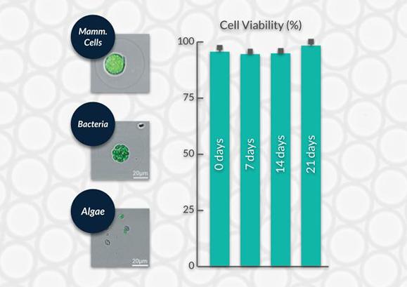 Cell Viability Hydrogel